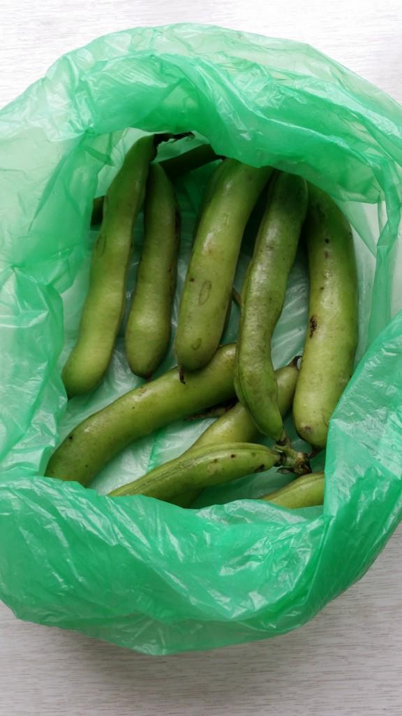 frische Bohnen vom Markt, noch in der Tüte