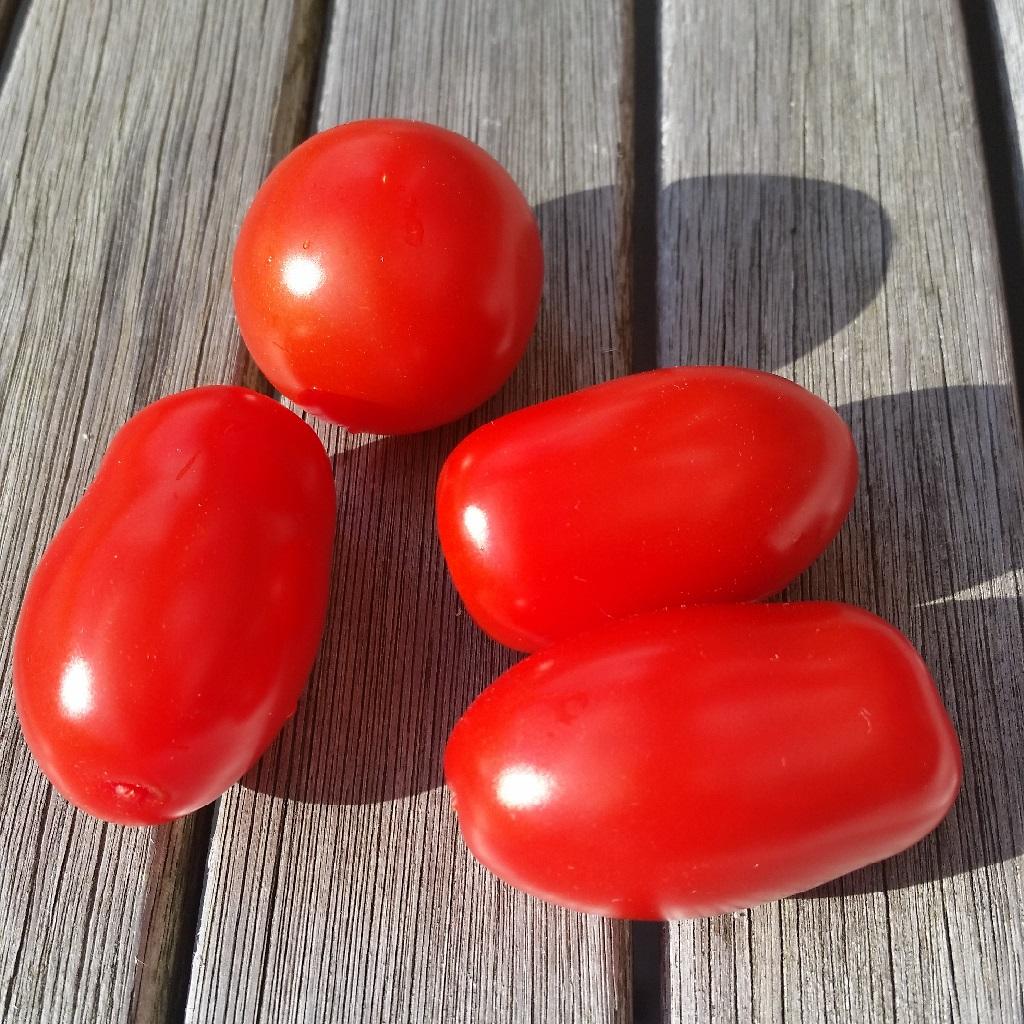 Tomaten für Salat